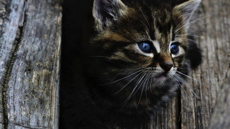 photo d'un petit chaton marron coincé dans un vieil arbre